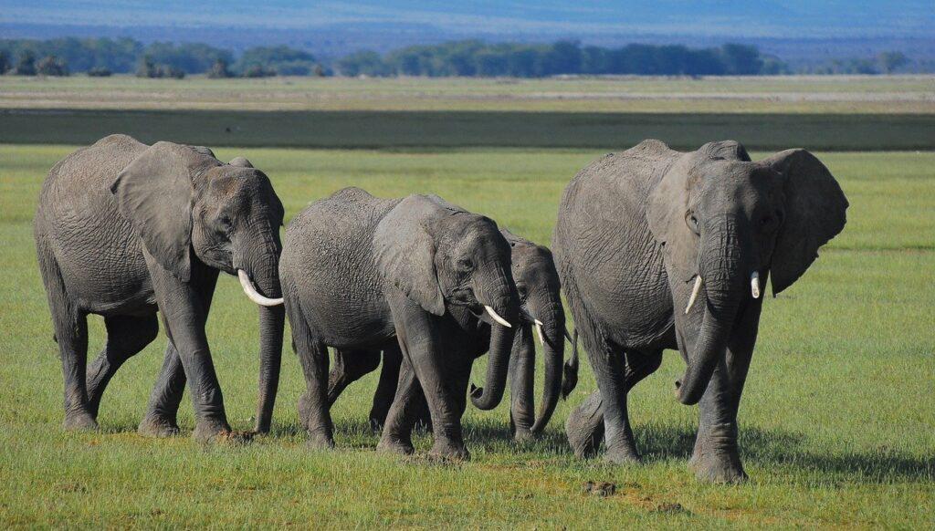 elephants, kenya, community